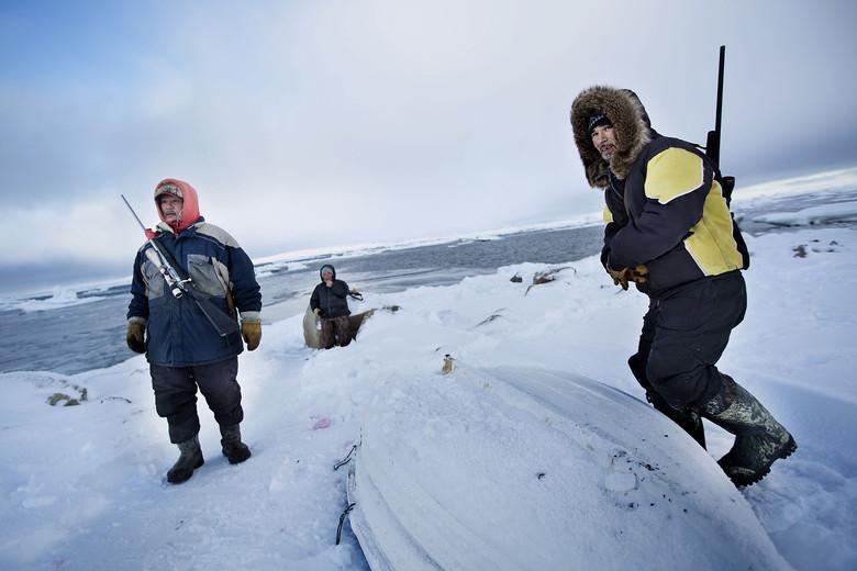 Зловещий гул со дна океана в районе Канады распугал птиц и животных