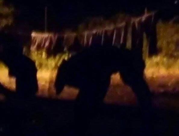 Странное существо попало на камеру видеонаблюдения в Пуэрто-Рико