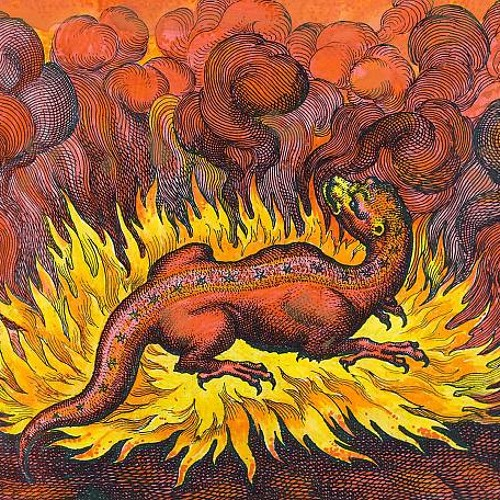 Огненная саламандра (5 фото)