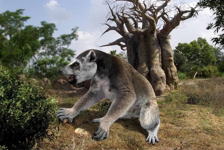 Исчезнувшие гигантские животные Мадагаскара (7 фото)