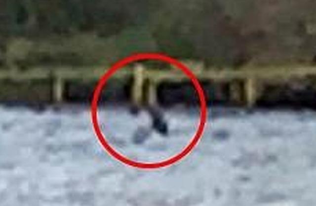Несси вернулась? Новое странное фото с озера Лох-Несс после того, как Несси признали мертвой