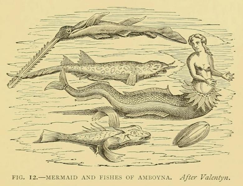 Встречи с русалками (6 фото)
