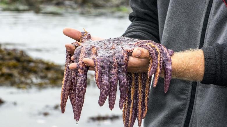 """Нашествие """"морских огурчиков"""" и другие странные океанские аномалии в США за последние годы (3 фото + 2 видео)"""