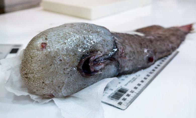 У берегов Австралии выловили рыбу