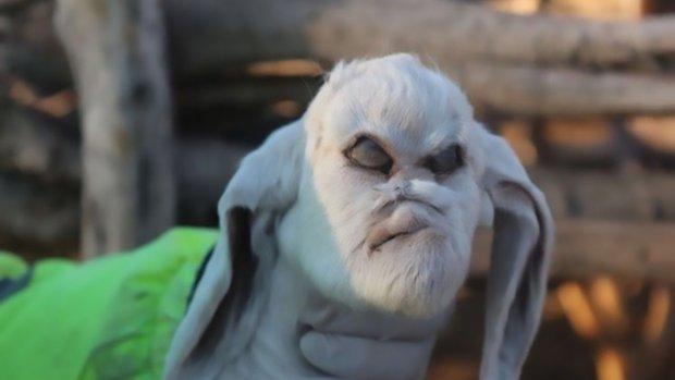 """В Турции у овцы-мутанта выросла вторая челюсть в ухе, а в Аргентине родился """"козел-дьявол"""" (5 фото + видео)"""