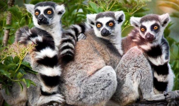 Недостающие звенья истории: Мадагаскар это остатки древнего погибшего континента?