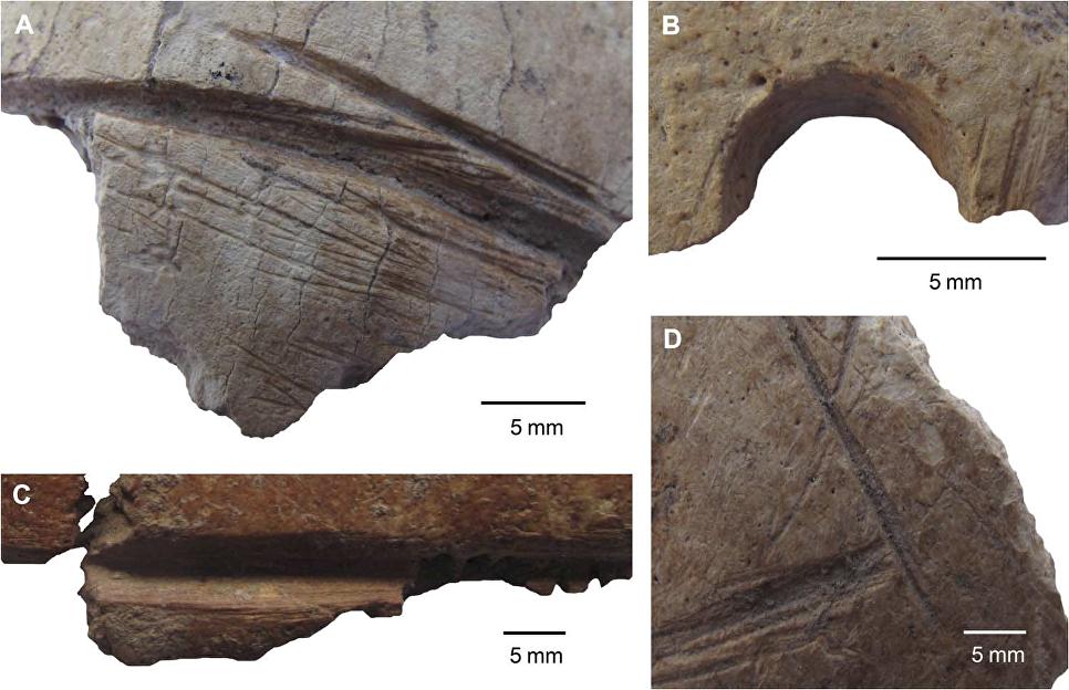 Новая загадка Гёбекли-Тепе: Археологи нашли там человеческие черепа, украшенные неизвестными узорами