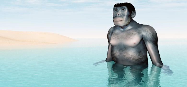 Теория водного происхождения человека