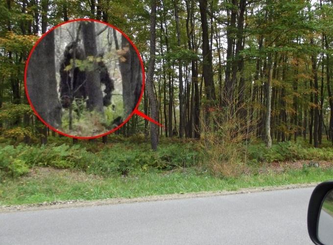 Американские йети (бигфуты) обладают способностью исчезать прямо на глазах очевидцев (2 фото)