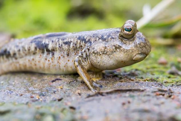 Загадочное существо, медленно погружавшееся в грязь, засняли в Австралии (2 фото + видео)