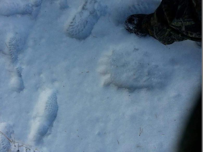 Американка уже 24 года ищет Снежного Человека, которого видела в юности (4 фото)