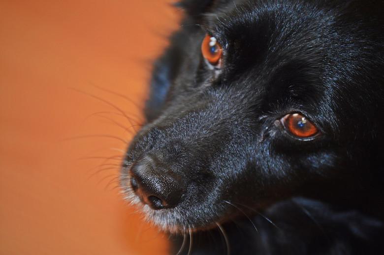 Истории об аномальных собаках (5 фото)