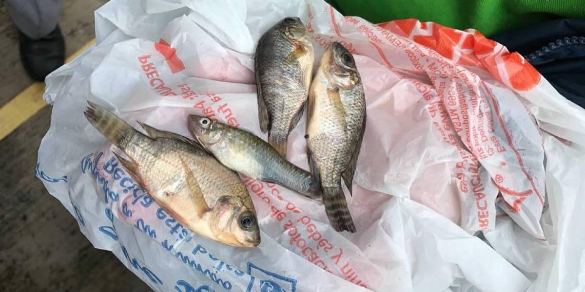 В Мексике вместе с дождем на землю падали рыбы