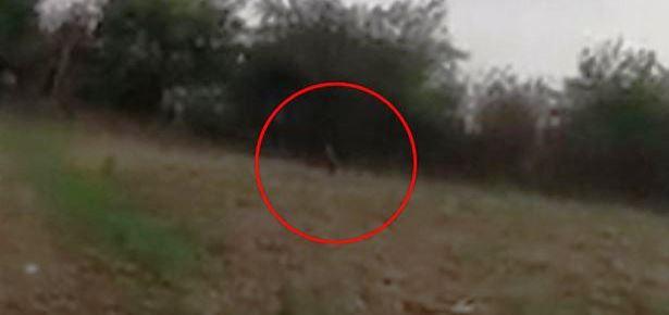 В Аргентине девушек-подростков напугал гоблин  (2 фото + видео)