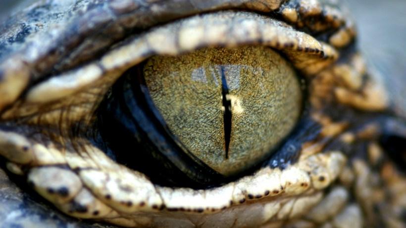 Как распознать рептилоида и кого уже вычислили