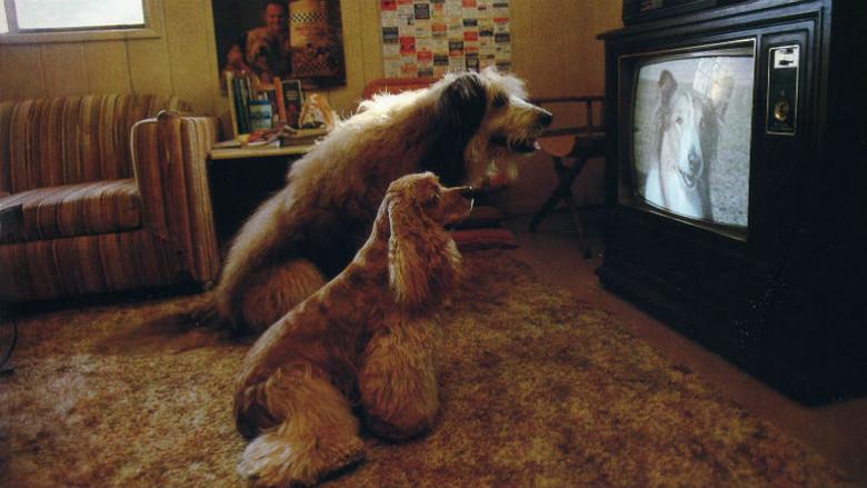 """""""Феномен старой собаки и телевизора"""" или как мы на инстинктах воспринимаем все Сверхъестественное (3 фото)"""