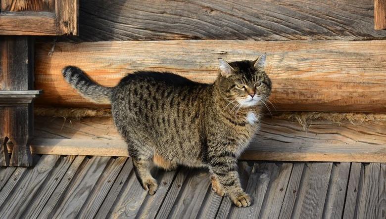 Дух отомстил за убитого кота (2 фото)