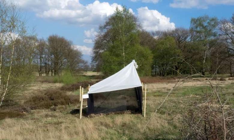 В Германии загадочным образом пропали почти все насекомые, заявляют экологи (2 фото)