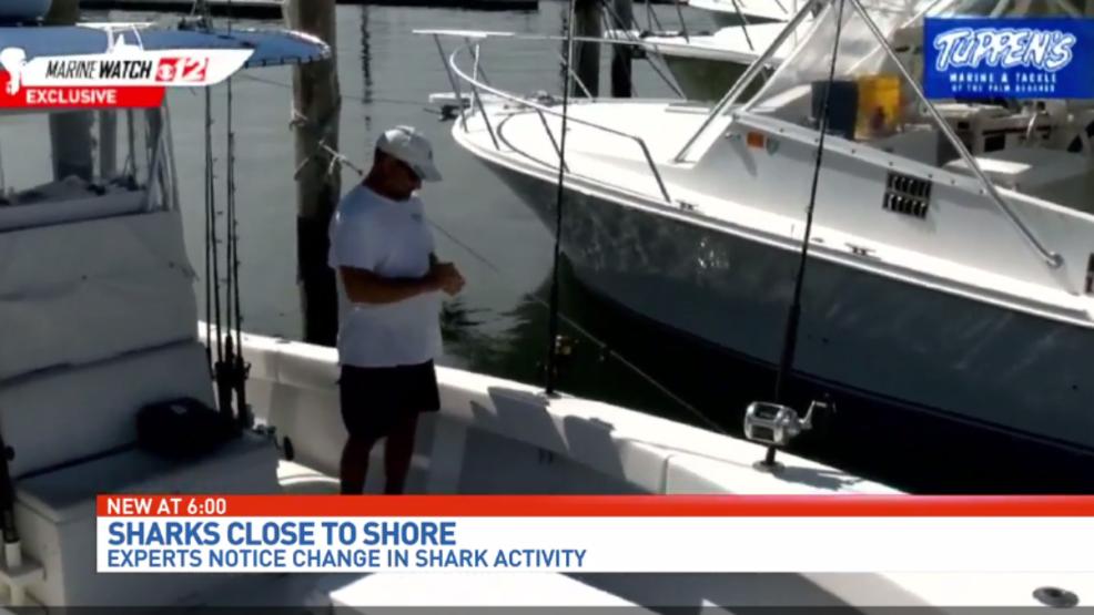 У побережья Палм-Бич (Флорида) стало слишком много акул и они стали чаще нападать на людей