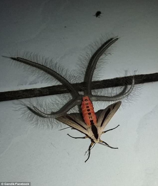 """Пользователей Интернета напугало необычное """"инопланетное"""" насекомое"""