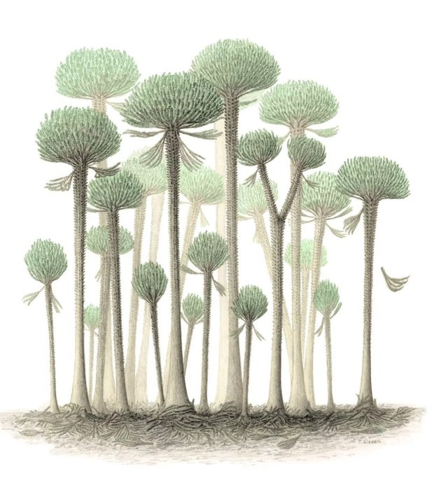 374 миллионов лет назад на Земле росли очень необычные деревья (3 фото)