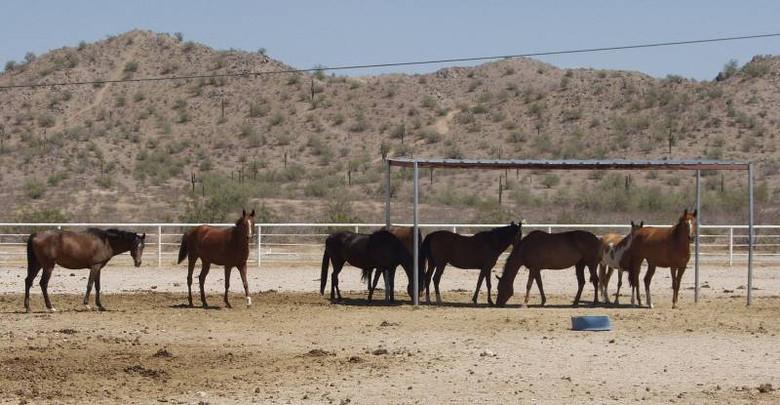 Фермер из Аризоны продает свое ранчо потому, что ему надоело регулярно сражаться с пришельцами (5 фото)