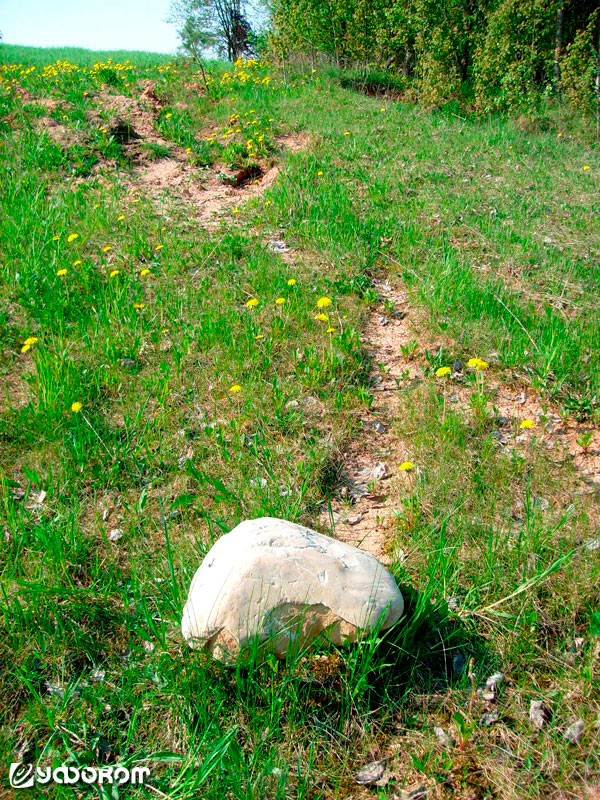 Феномен движущихся камней в... Беларуси