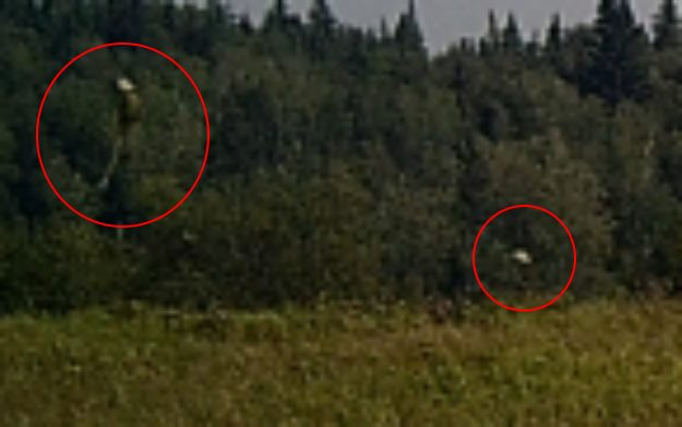 Неопознанные существа попали на охотничью камеру в Саскачеване (4 фото)