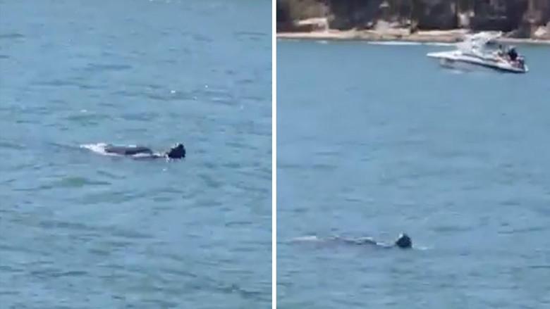В австралийской реке засняли какое-то крупное существо, которое может быть монстром из легенд (2 фото + видео)