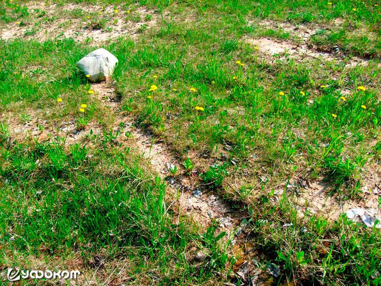 Феномен движущихся камней в... Беларуси (5 фото)