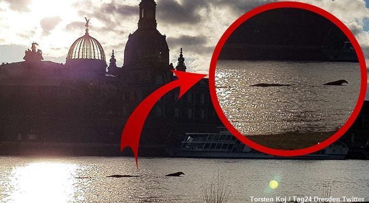 В Дрездене на реке Эльба засняли в воде огромную рыбу или неведомое существо (2 фото)