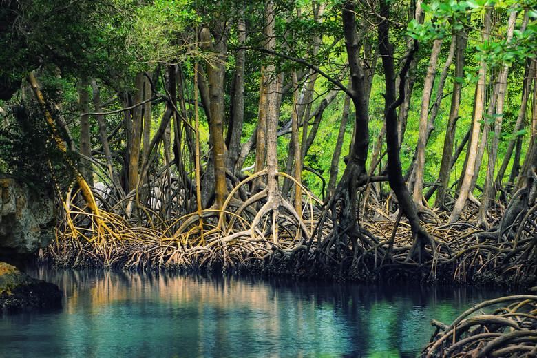 Мальчик с красными глазами в мангровых зарослях