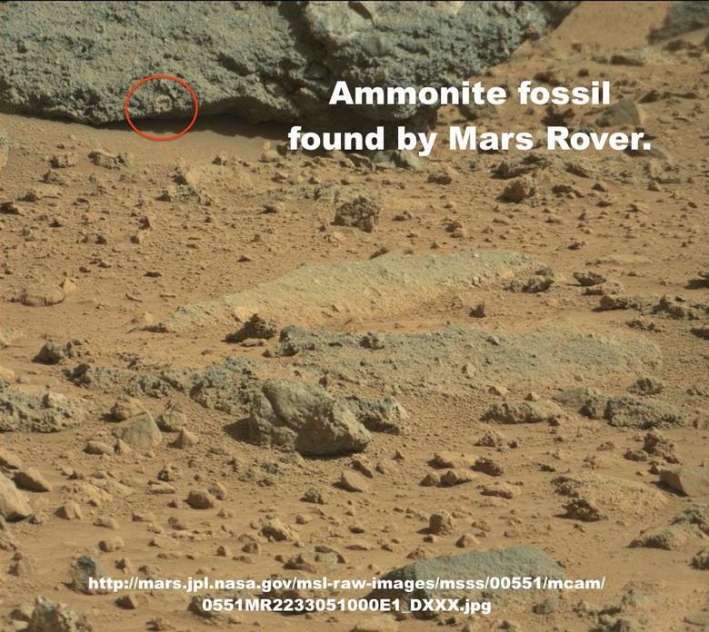 На новых фото с Марса прямо рядом с опорами марсохода видны объекты, похожие на морские раковины (7 фото)