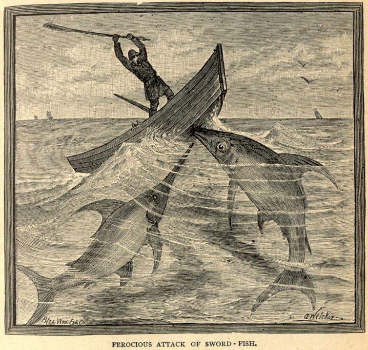 """""""Живые торпеды"""" или как невероятные меч-рыбы атакуют корабли и даже подводные лодки"""