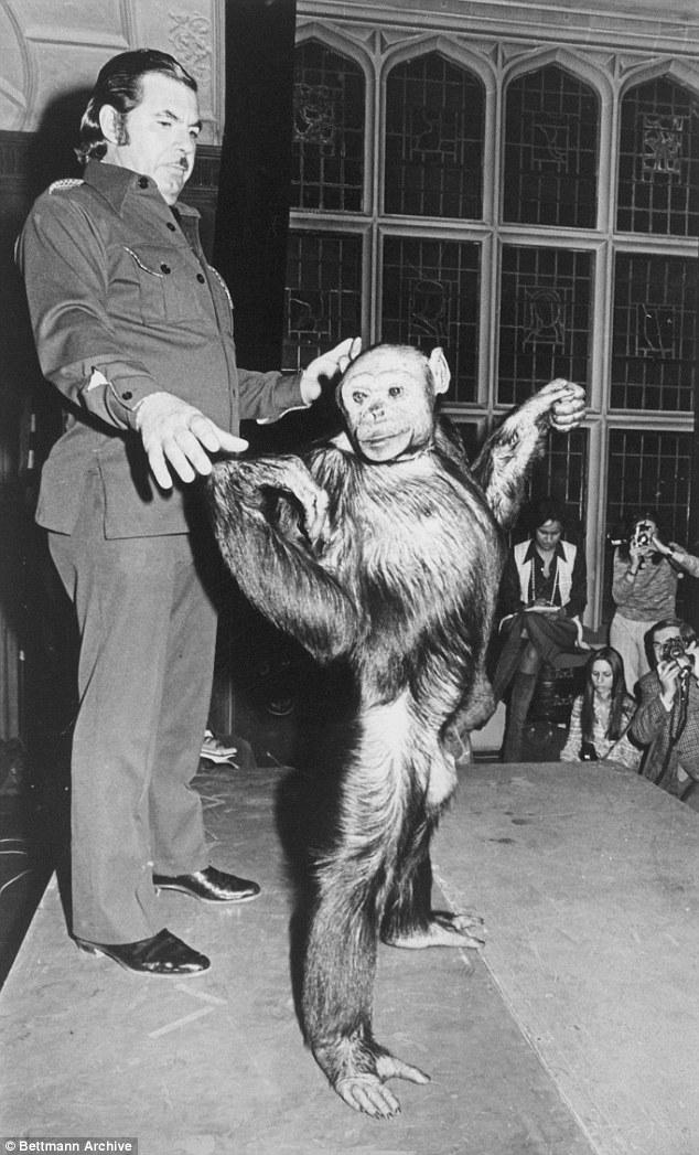 В 1920-х годах в США родился гибрид человека и шимпанзе (3 фото)