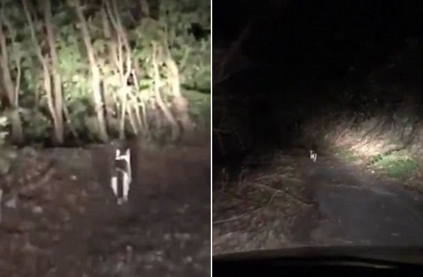 """""""Это был дух леса!"""": Заблудившихся японцев из леса вывел таинственно появившийся кот"""