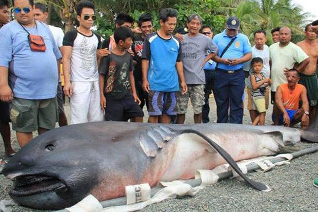 На пляж Филиппин выкинуло редкую глубинную акулу. Жители связали это с грядущими большими бедствиями