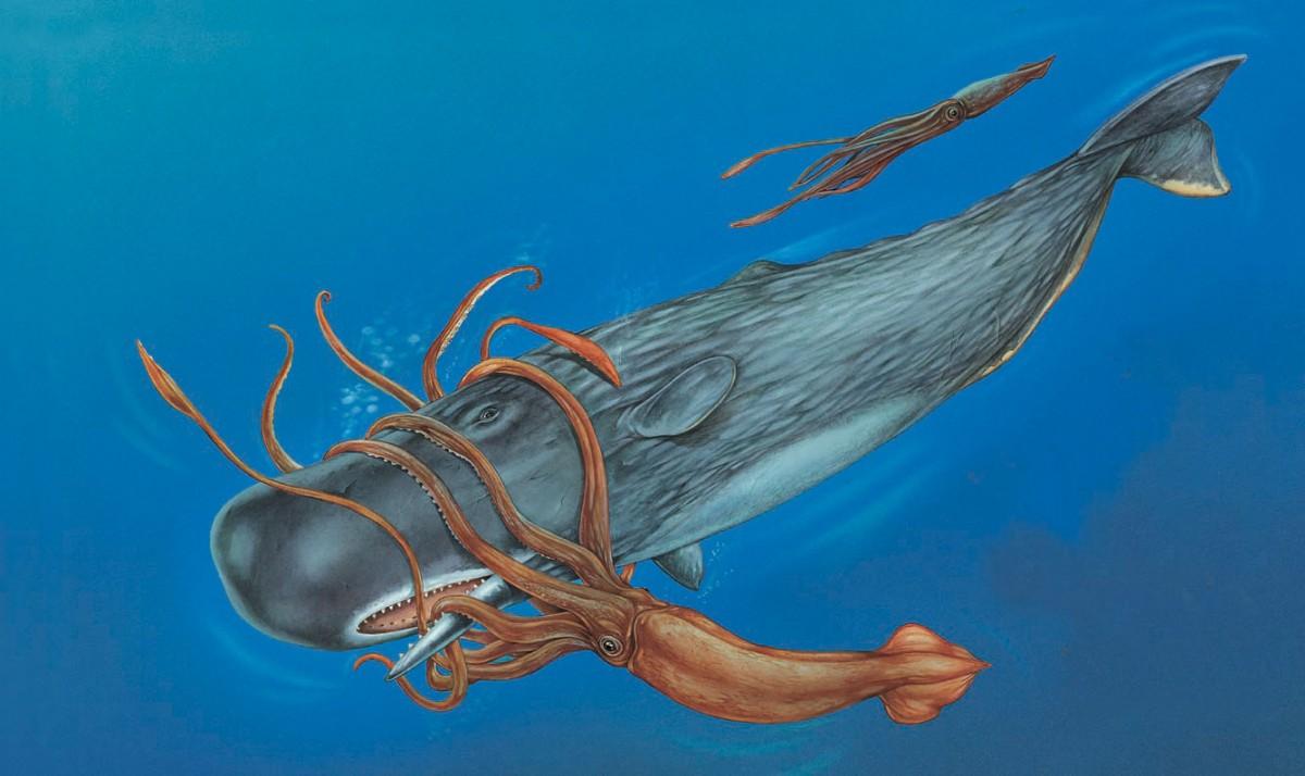 Кашалот - самое загадочное животное Земли