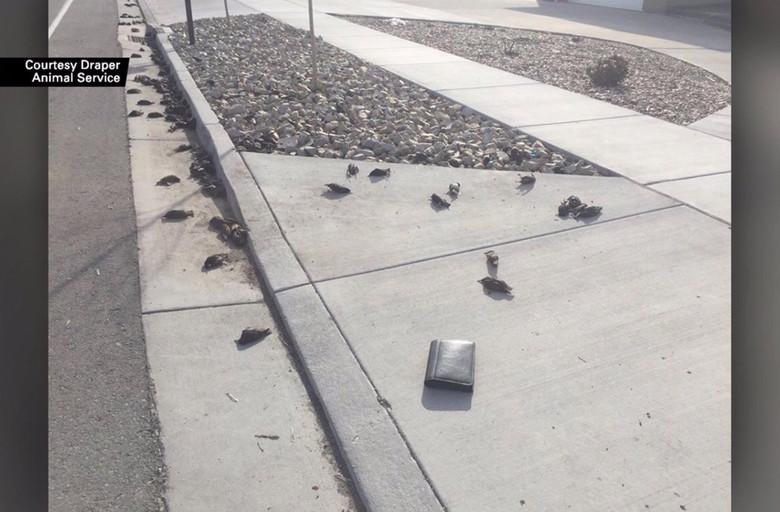 В штате Юта сотни мертвых птиц внезапно упали с неба (3 фото)