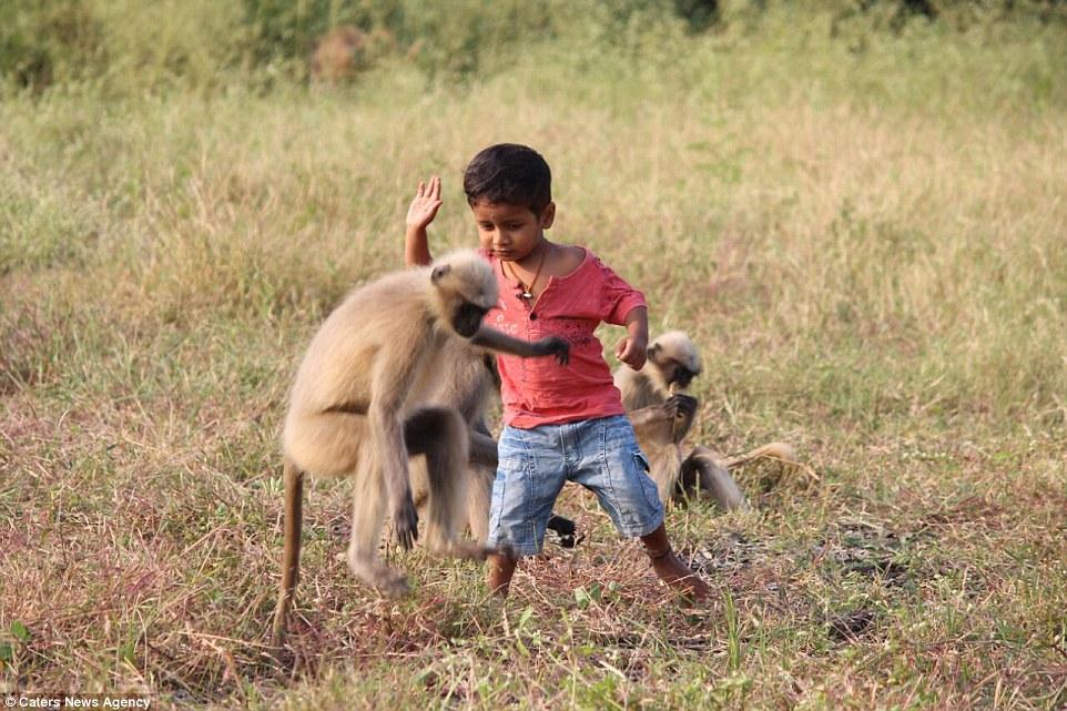 Реальный Маугли: В Индии двухлетний мальчик проводит больше времени с обезьянами, чем с людьми