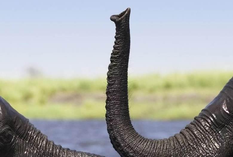 Нечто, похожее на хобот слона, смотрело на меня из пруда