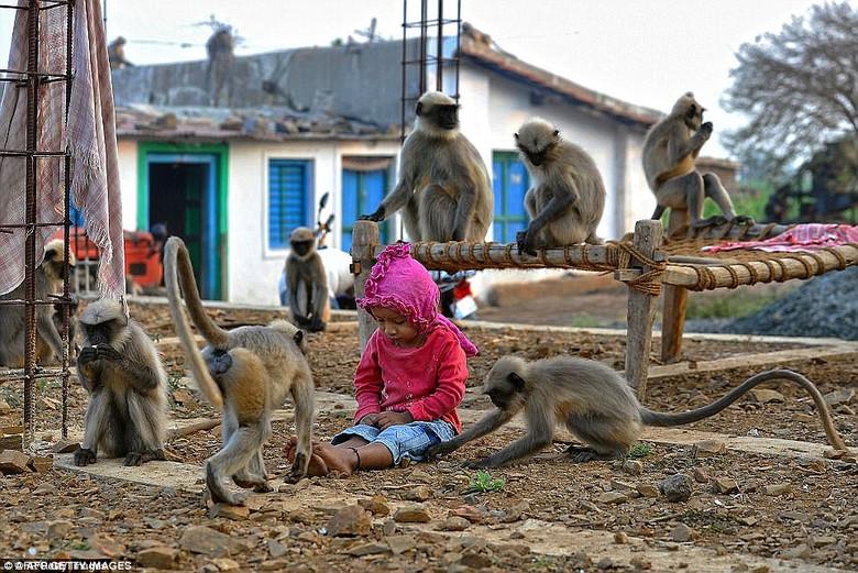 Реальный Маугли: В Индии двухлетний мальчик проводит больше времени с обезьянами, чем с людьми (14 фото)