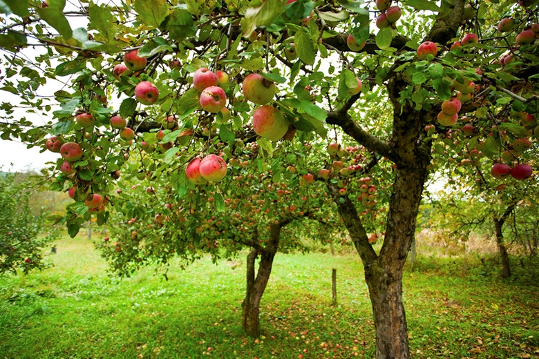 Разговор с инопланетянами под яблоней