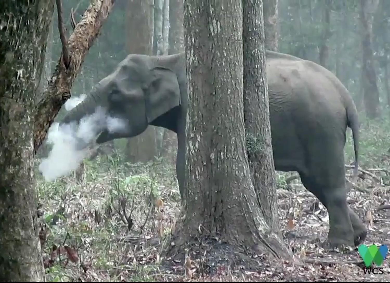 Загадка курящего слона
