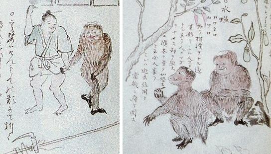 """Таинственный полуводный и волосатый """"Кенмун"""" из Японии (3 фото)"""