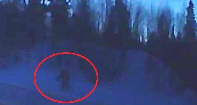Неподалеку от Северодвинска на камеру видеорегистратора вероятно попал Снежный человек
