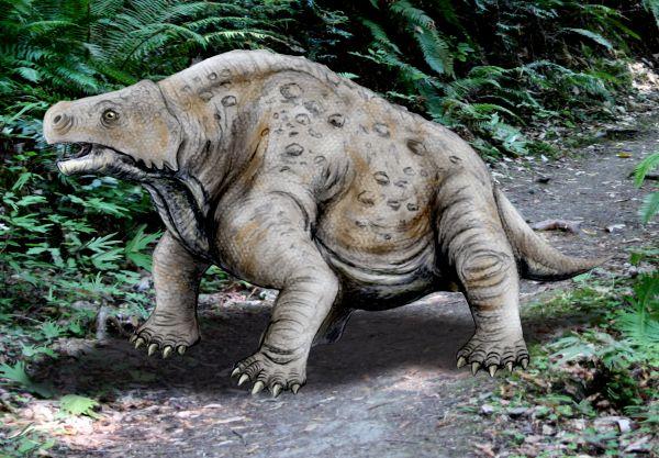 Наблюдения живых динозавров в Южной Америке (16 фото)