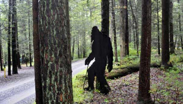 """Загадка """"Зверя Болама"""": Могут ли многие наблюдения йети быть порождением разума самого человека? (3 фото)"""