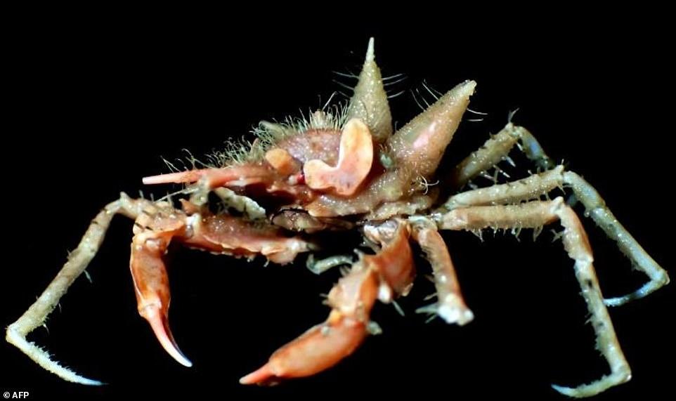 В Индийском океане найдено много новых существ, в том числе огромный морской таракан