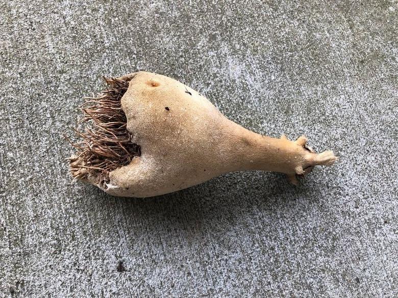 """Женщина нашла на крыльце странный """"корень"""", а через 2 недели из него полезли сотни крошечных червяков (2 фото)"""
